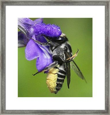 Bee-licious Flower Framed Print