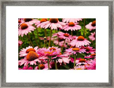 Bee Line At High Line Nyc Framed Print