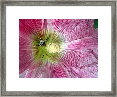Bee Loving Framed Print by Mike Podhorzer