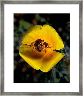 Bee Mine Framed Print by SEA Art