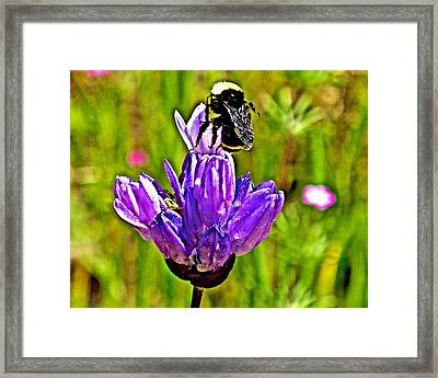 Bee On A Blue Dick In Park Sierra Near Coarsegold-california   Framed Print by Ruth Hager