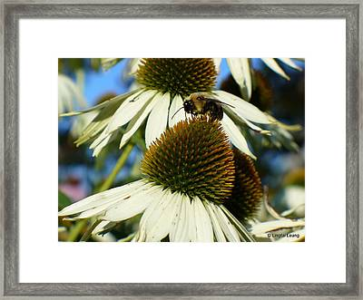 Framed Print featuring the photograph Bee On A Cone Flower by Lingfai Leung