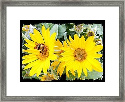 Bee On A Wild Sunflower Framed Print