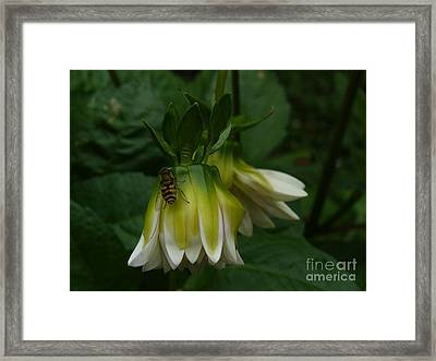 Framed Print featuring the photograph Bee On Flower by Jane Ford