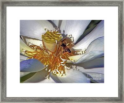 Bee On Lotus Framed Print