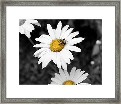 Bee On My Daisy Framed Print by Kimberly Elliott