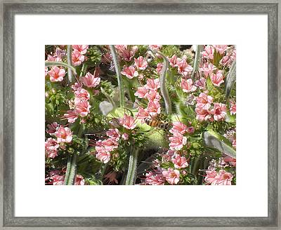 Bee On Pink Flowers Framed Print by Mark Barclay