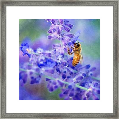Bee On Russian Sage #2 - Square Crop Framed Print by Nikolyn McDonald