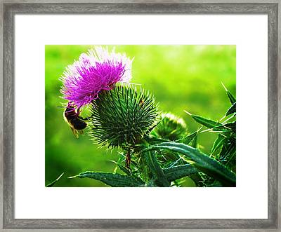 Bee On Thistle Framed Print