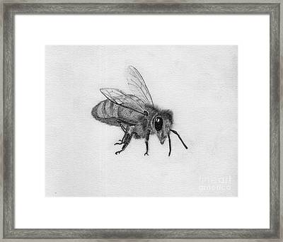 Bee Pencil Drawing Framed Print by Dan Julien