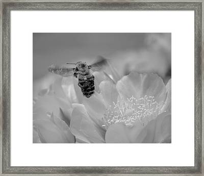 Bee Rising Framed Print