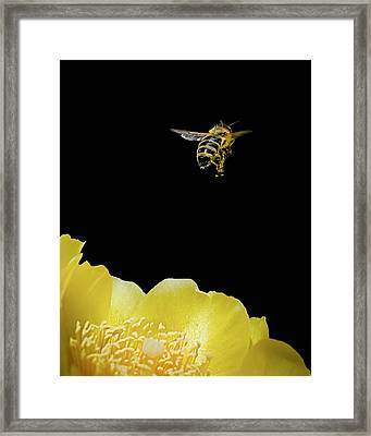 Bee Rising #2 Framed Print by Len Romanick