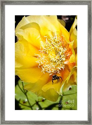 Bee Stands Guard Framed Print