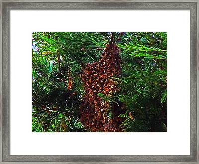 Bee Swarm Framed Print