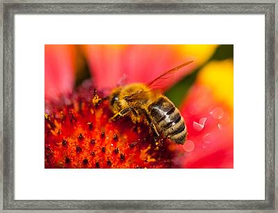 Bee Time Framed Print