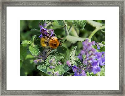 Framed Print featuring the photograph Bee Too by David Gleeson