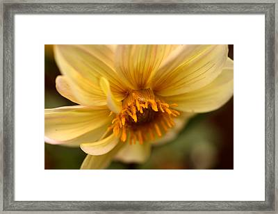Bee Trap Framed Print
