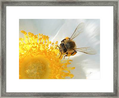 Framed Print featuring the photograph Bee-u-tiful by TK Goforth
