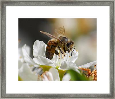 Framed Print featuring the photograph Bee4honey by Patrick Witz