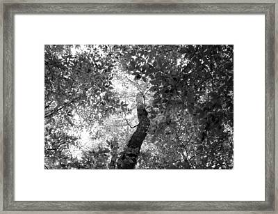 Beech And Maple Framed Print