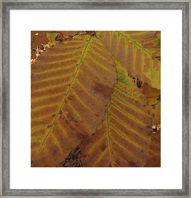 Framed Print featuring the photograph Beech Leaves by Aurora Levins Morales