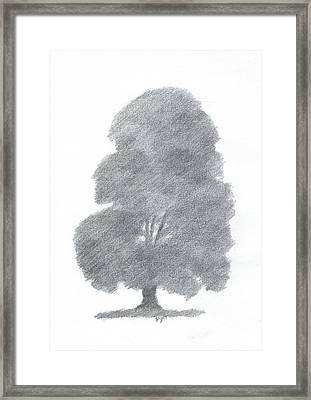 Beech Tree Drawing Number Four Framed Print by Alan Daysh