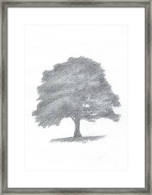 Beech Tree Drawing Number Three Framed Print by Alan Daysh