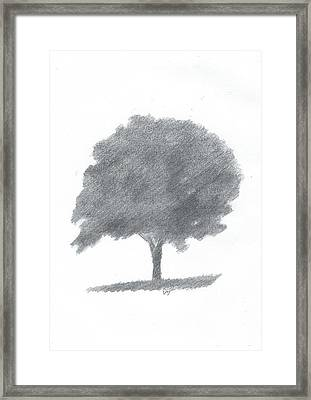 Beech Tree Drawing Number Two Framed Print by Alan Daysh