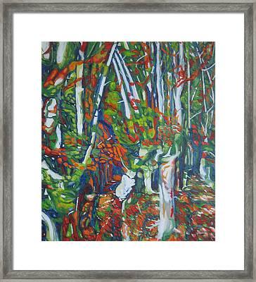 Beech Trees Framed Print