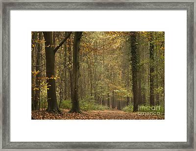 Beech Wood Walk Framed Print by Anne Gilbert