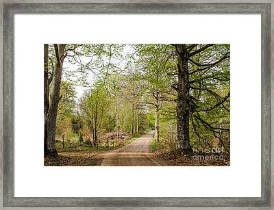 Framed Print featuring the photograph Beeches At Springtime by Kennerth and Birgitta Kullman