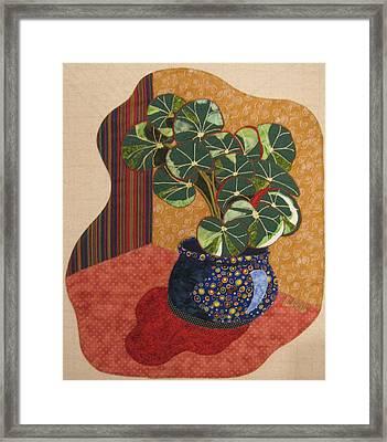 Beefsteak Begonia Framed Print by Lynda K Boardman