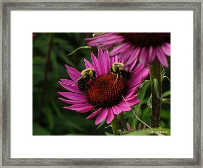 Framed Print featuring the photograph Beelievers by Lingfai Leung