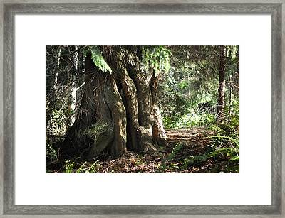 Been Around Awhile Framed Print