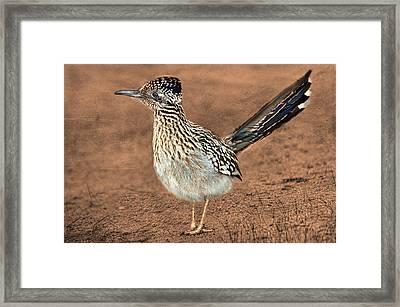 Beep Beep Framed Print by Barbara Manis