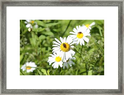 Bees And Daisies Framed Print by Suzi Nelson