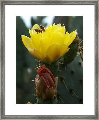 Bees At Play Framed Print