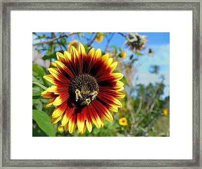 Bees At Work Framed Print