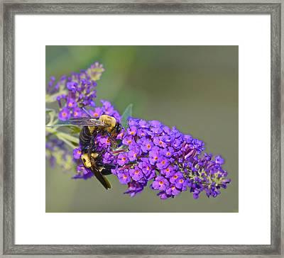 Bees At Work Framed Print