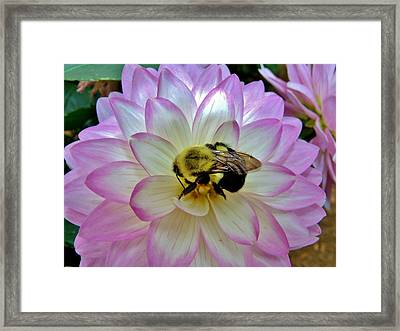 Bee's Delight Framed Print