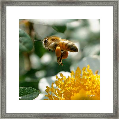 Bee's Feet Squared Framed Print by TK Goforth