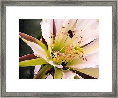 Bees In Blossom Framed Print