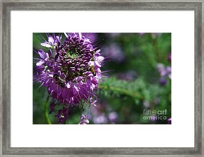 Bees In Purple Framed Print
