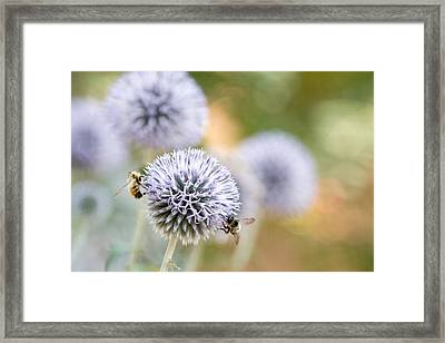Framed Print featuring the photograph Bees In The Garden by Peggy Collins