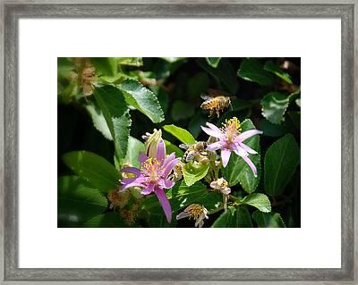 Bee's Larger Framed Print by Kelli Donovan
