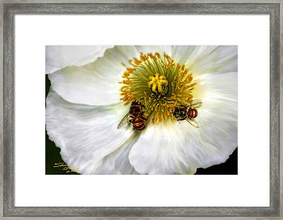 Bees On A Flower Framed Print