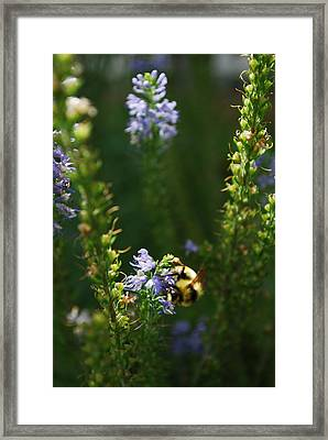 Bees Please Framed Print by Aaron Bedell