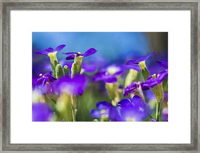 Bee's Point Of View Framed Print