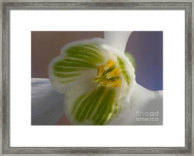 Bee's View Of A Snowdrop Framed Print
