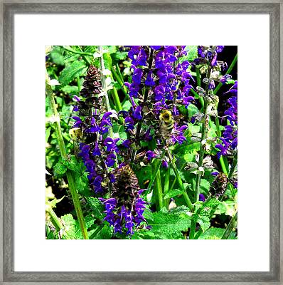 Bees Wing Framed Print by  George Griffiths